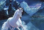 Puzzle cheval polaire