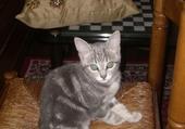 Jeu puzzle Petit chaton au regard mimi