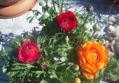 Puzzle Jeux de puzzle : Oh les belles fleurs !