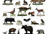 Puzzle les animaux de la fôret