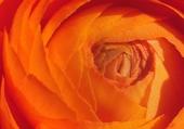 Jeux de puzzle : fleur !
