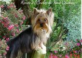 amour de petit chien