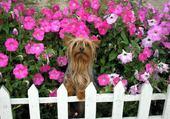 Jeu puzzle amour de petit chien