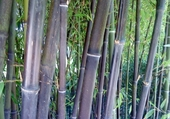 Puzzle Jeu puzzle bamboo
