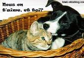 Puzzles N'abandonez pas vos animaux!!!