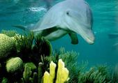 Puzzle Puzzle dauphins