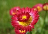 Puzzle fleurs du jardin