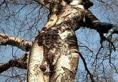 femme arbre