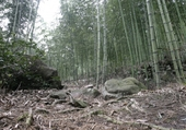 Puzzle bambous et racines