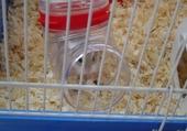 un hamster trop mignon