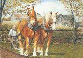 Puzzle en ligne chevaux de trait