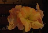 Jeu puzzle fleur