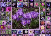 Puzzle multi fleurs