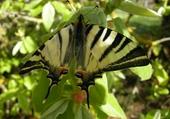 Puzzles papillon