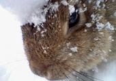 Puzzle Lapin dans la neige