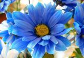 Jeu puzzle fleur bleue