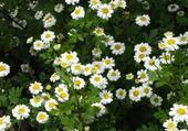 Puzzle Fleurs 1