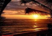 Puzzles Coucher de soleil et palmiers