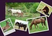 Puzzle chevaux du far-ouest