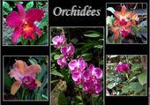 Puzzle jolies fleurs