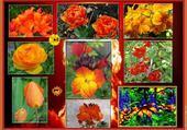 Puzzle en ligne multi fleurs