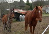 Puzzles mes deux chevaux