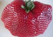 Jeux de puzzle : La vie est belle comme une fraise
