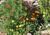Puzzles petit coin de jardin