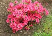 Puzzle en ligne fleurs naturelles