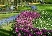 hollande en fleurs