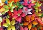 Puzzle en ligne fleurs colorées