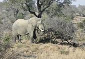 Puzzle éléphant d'Afrique