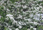 Jeu puzzle fleurs blanches