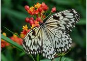 Puzzle merveilleuse nature