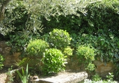 Puzzle Jardin