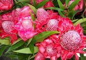 Jeu puzzle fleurs de la reunion
