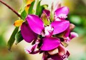 Puzzle gratuit fleur exotique