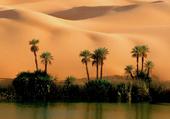 pulzze désert