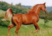 Puzzles cheval
