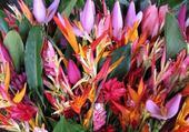 Puzzle en ligne fleur exotique