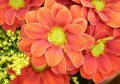 Puzzle fleurs orangées
