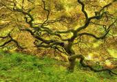 Puzzle pulzze arbre