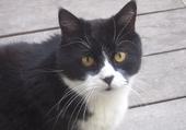 beau chat