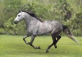 Puzzle un cheval gris