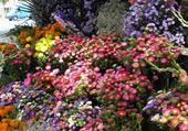 Puzzle festival de fleurs