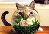Puzzle Chat et poisson