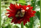 Fleur et escargots