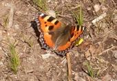 Puzzle en ligne papillon