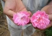 Puzzle fleur de ouarzazete