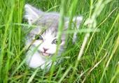 Puzzle gratuit chaton lila